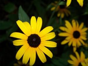 flower_bloom_spring_flower